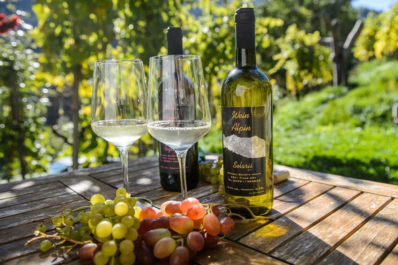 Weinbau Armin Schütz in Pians / Weinbau Tirol Tirol Wein Tiroler Weinbauverband Winzer Landwirtschaft Tirol PIWI / Foto: Thomas Böhm Photographie Imst 2018 10 09 ( boehm )